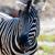 zebra · portré · csődör · Afrika · háttér · fekete - stock fotó © lunamarina