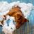 непослушный · щенков · собака · подушкой - Сток-фото © lunamarina