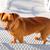 brown dog climbing stais posing looking at camera stock photo © lunamarina