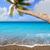marrom · areia · da · praia · escrito · palavra · canárias · árvore - foto stock © lunamarina