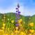 laranja · campo · foco · efeito · primavera - foto stock © lunamarina