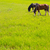chevaux · paysage · ciel · bleu · printemps · herbe - photo stock © lunamarina