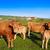 inekler · yol · İspanya · bahar · doğa · arka · plan - stok fotoğraf © lunamarina