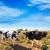 menorca friesian cows cattle grazing near ciutadella stock photo © lunamarina