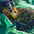 Olives harvest picking hands at Mediterranean stock photo © lunamarina