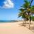 arrecife lanzarote playa reducto beach palm trees stock photo © lunamarina