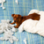 méchant · chiot · chien · oreiller - photo stock © lunamarina
