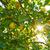 verde · natura · acqua · foresta · sfondo - foto d'archivio © lunamarina