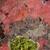 lichen green on red rock texture nature stock photo © lunamarina