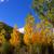 осень · осень · лес · желтый · тополь - Сток-фото © lunamarina
