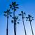 California · wysoki · palm · Błękitne · niebo · USA · niebo - zdjęcia stock © lunamarina
