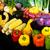 表示 · 市場 · 野菜 · 農民 · 明るい - ストックフォト © LynneAlbright