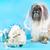 花嫁 · ブライダル · ベール · ティアラ · 着用 - ストックフォト © LynneAlbright