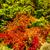 wonderful autumn in the forest stock photo © lypnyk2