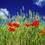 été · vue · blé · or · ciel · bleu - photo stock © lypnyk2