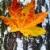 alleen · berk · boom · meer · landschap - stockfoto © lypnyk2