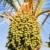 randevú · pálma · gyümölcsök · aszalt · ramadán · étel - stock fotó © lypnyk2