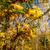 malowniczy · jesienny · lasu · charakter · rezerwa - zdjęcia stock © lypnyk2
