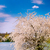 blooming tree and nice lake by springtime stock photo © lypnyk2