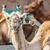 deve · hayvan · park · açmak · bir · gökyüzü - stok fotoğraf © macsim