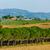 Тоскана · лес · дерево · трава · деревья · лет - Сток-фото © macsim