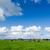 子羊 · 風景 · 小さな · 立って · 丘 · 見える - ストックフォト © macsim
