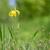 флаг · Iris · красивой · желтый · цветок · природы - Сток-фото © mady70