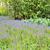 keukenhof gardens stock photo © mady70