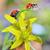 piros · katicabogár · katicabogár · bogár · zöld · levél · természet - stock fotó © mady70