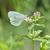 lagartas · repolho · borboleta · macro · natureza · planta - foto stock © mady70