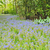 jardins · Holanda · flor · sapatos · sapato · objetos - foto stock © mady70
