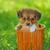 щенков · собака · соломы · корзины · молодые · животного - Сток-фото © mady70