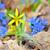 amarelo · prímula · crescente · flor · folhas - foto stock © mady70