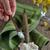 кокосового · нефть · ложку · воды · продовольствие - Сток-фото © mady70