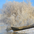 морозный · зима · деревья · лодка · Дунай · реке - Сток-фото © mady70