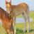 馬 · 国 · 風光明媚な · ファーム · セントラル · ケンタッキー州 - ストックフォト © mady70