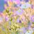 dohány · rózsaszín · virágok · nyár · idő · virág - stock fotó © mady70