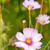 virágzó · tavasz · rügy · reggel · fény · napos - stock fotó © mady70
