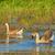 família · mãe · natação · lagoa · água · primavera - foto stock © mady70