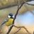 nagyszerű · cici · kert · madár · zöld · fekete - stock fotó © mady70