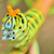 oruga · rama · primavera · mariposa · jardín · belleza - foto stock © mady70