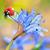 coccinelle · feuille · herbe · verte · gouttes · d'eau · bleu · herbe - photo stock © mady70