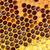 honing · honingraat · natuur · gezondheid · achtergrond - stockfoto © mady70