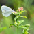 papillon · sauvage · été · fleur · printemps · herbe - photo stock © mady70