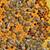 macro · shot · bijen · honingraat · tuin · frame - stockfoto © mady70