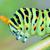 tırtıl · ayrıntılar · kelebek · doğa · güzellik · yaz - stok fotoğraf © mady70