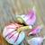 гвоздика · лампа · чеснока · продовольствие · цвета · трава - Сток-фото © mady70