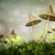 twee · vers · champignons · groene · mos · geïsoleerd - stockfoto © magann