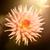 witte · kleur · dahlia · bloem · daisy · plant - stockfoto © magann