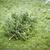 枯れ木 · 雪 · 美 · フィールド · 死 · 死んだ - ストックフォト © magann
